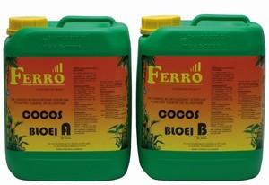 ferro-cocos-bloei-ab