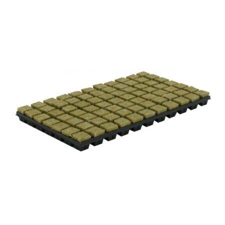 cultilene-steenwoltray-per-tray